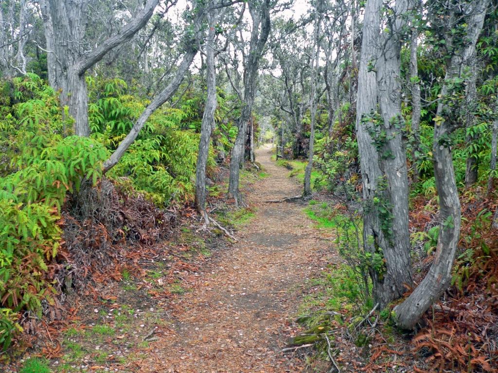 Tropical Trail